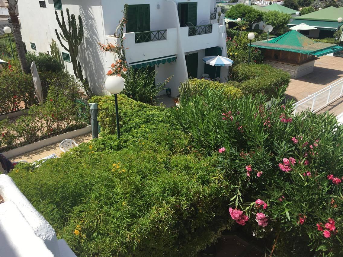 jardin y flores