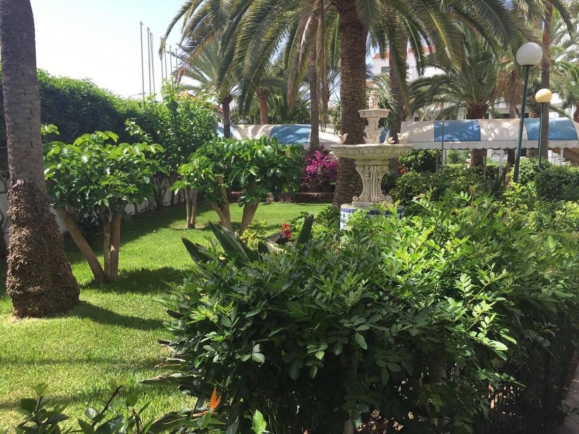 Mantenimiento de jardines y piscinas en gran canaria for Mantenimiento de jardines